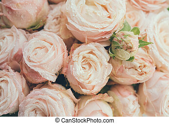 Beautiful fresh beige roses background