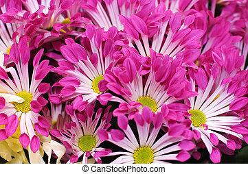 Beautiful fresh flowers in a bouquet