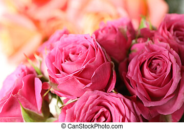 Beautiful fresh pink roses as background, closeup