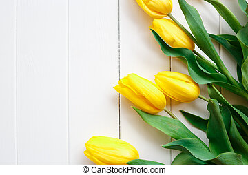 Beautiful fresh spring tulips on a white background.