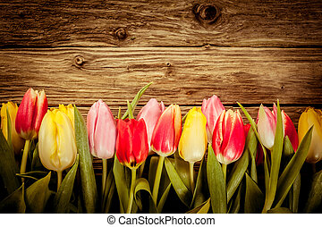 Beautiful fresh tulip border on rustic wood