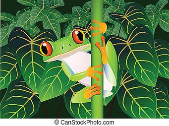 Beautiful frog - Vector illustration of Beautiful green frog