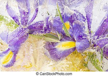 beautiful frozen abstraction with irises