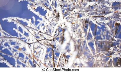 Beautiful frozen branch