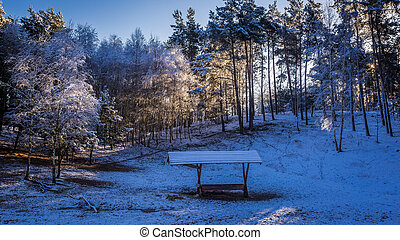 Beautiful frozen forest in winter with feeder for animals