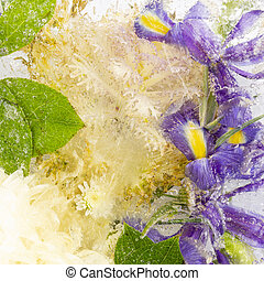 beautiful frozen organic abstraction