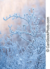 beautiful frozen winter bush