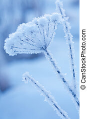 beautiful frozen winter plant