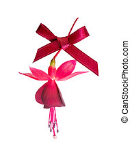beautiful fuchsia flower with red bow isolated on white backgrou
