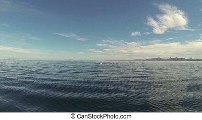 Mobula rays jumping - Beautiful full HD footage of Mobula...