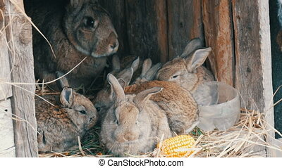 Beautiful funny little young rabbit cubs and their mom eat grass in a cage on the farm.