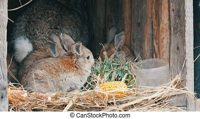 Beautiful funny little young rabbit cubs and their mom eat...