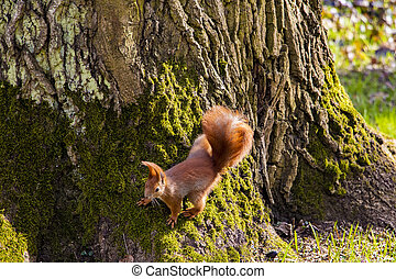 Beautiful funny squirrel sitting on a tree in the park.