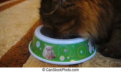 beautiful furry cat eating from a bowl, slow motion.