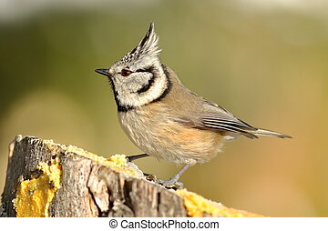 beautiful garden bird at feeder
