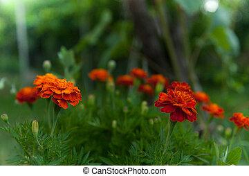 beautiful garden flowers,