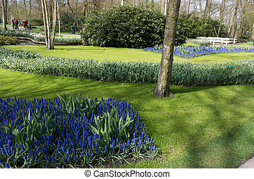 Beautiful garden in spring. Springtime