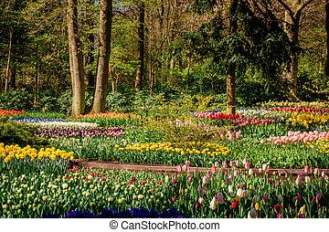 Beautiful garden. Park in The Spring. Spring landscape