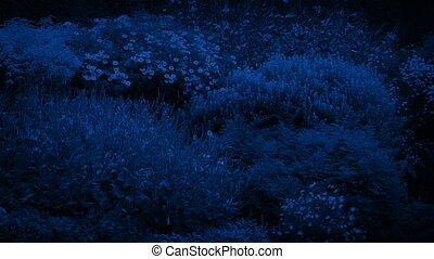 Beautiful Garden Plants And Flowers At Night - Many pretty...