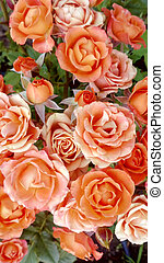 Beautiful garden roses bouquet background for a greeting card