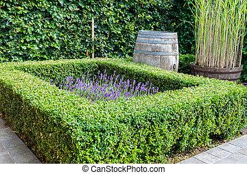 beautiful garden with evergreen boxwood plants