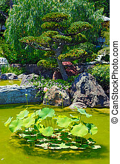 Beautiful garden with pond
