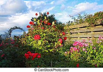Beautiful garden with roses