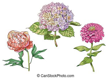 Beautiful gentle flowers isolated on white background. Hydrangea, peony and zinnia. A large buds and inflorescence on a stem with green leaves. Botanical vector Illustration.