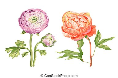 Beautiful gentle pink peony flowers isolated on white background. A large buds on a stem with green leaves. Botanical vector Illustration.
