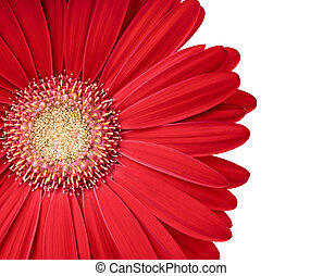Beautiful gerbera flower isolated on white. Copy space for ...