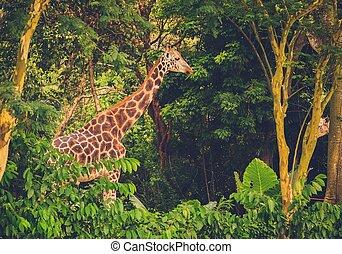 Beautiful giraffe in front of green trees