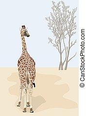 Beautiful giraffe looks at dry tree in the desert.