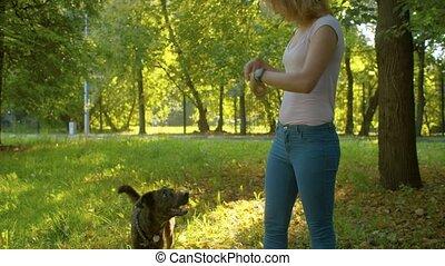 Beautiful girl handler training a dog