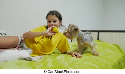 Beautiful girl teen and cat. girl cat and dog playing on...