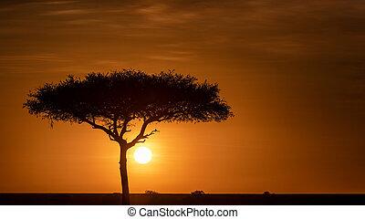 Beautiful Golden African Sunset Tree Silhouette