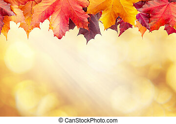 Beautiful golden autumn blurred background with a border of maple leaves