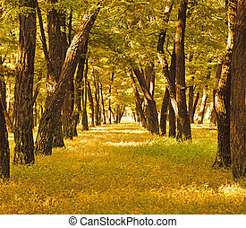 beautiful golden autumn forest