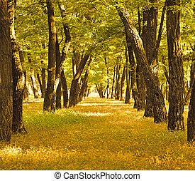 beautiful golden autumn forest