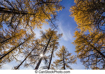 Beautiful golden autumn forest with yellow leaves.