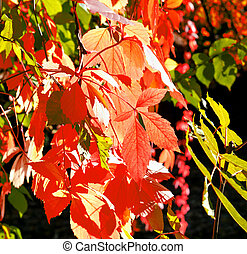 Beautiful golden autumn leaves