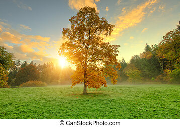 Beautiful golden colored autumn tree in meadow.