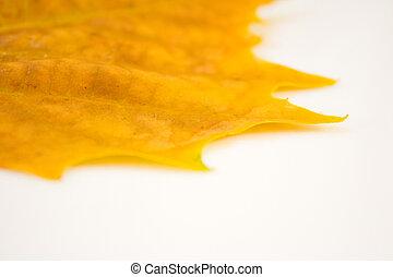 Beautiful golden leaves in autumn
