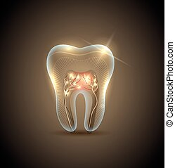 Beautiful golden transparent tooth with roots illustration....