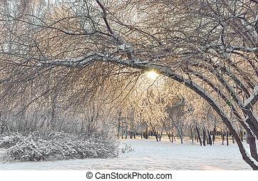 Beautiful golden Winter landscape in city park at sunrise