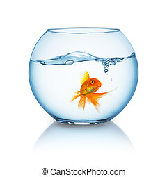 beautiful goldfish in a fishbowl