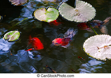 Beautiful goldfishes swimming in a pond