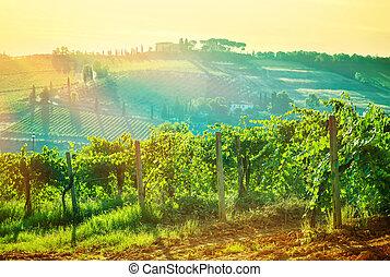 Beautiful grape valley landscape