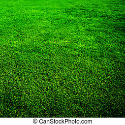 Beautiful Grass Background