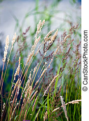 beautiful grass bents on the background of blue water