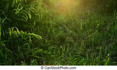 Beautiful grass in backlight at sunset. Russia - Beautiful...